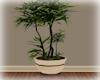 [Luv] 5B - Plant 1