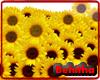 Sunflower Floorlight
