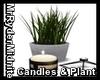 Loft Candles & Plant