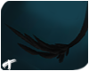 Raven | Feathered Tail