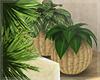 Tropicana - Plants