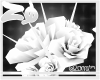 Papim | Roses