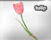 TULIP FLOWER IN HAND