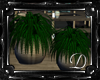 .:D:.Moorea Plants