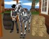 LEPORD APP. HORSE