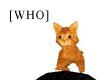 [WHO] red head kitten