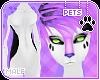 [Pets] Hana   abless fur