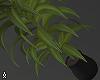 Plant Deriv.