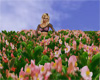Garden Flowers Patch