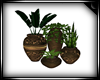 !S Plant Grouping