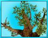 Magic Oak Tree