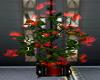Lovely Plant KK