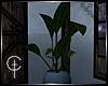[CVT]Cozy Rain Plant