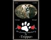 Loving Memory Of Tripper