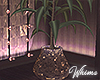 Valentine Love Plant