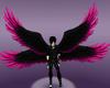 Pink/Black Wings