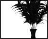 Funky Black House Plant