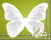 White Butterfly Wings