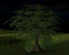 CCP The Tree