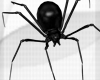 [Black Widow]