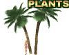 Large Palm Tree Plants