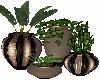 Decore Plants
