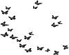 Onyx Butterflies