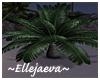 Tropical Small Palm Tree