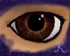 Tigers Eye Eyes M