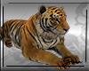 Tiger Pet M