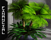 ϟ Indoor Palms