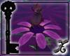 *XS* Faerie Flower Dance