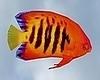 Deep Sea Fish 5