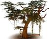 Redwood Lovers Treeswing
