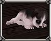 ~E- Husky Puppy Sleepy