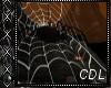 !C* T Spider Web