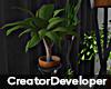 [Devyn] Decorative Plant