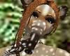 Baby Tapir Trunk F