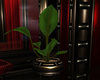 Red Lotus Potted Plant