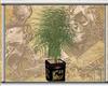 Oriental Garden Plant