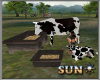 !SR! Farm cow