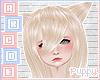 🐕  Zaciella M Blonde