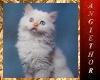 !ABT Poesie du Chat