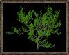 ⚡ Leafy Bush