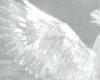 angelicc