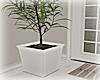 [Luv] Plant 3