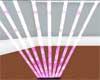 Pink Laser Lights