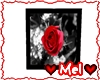 *Mdt* Endless Rose Pic