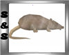 Dead Mole Rat