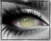 [BOB] Cataracts IT